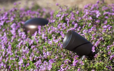 4 Worth-It Reasons to Add Outdoor Audio to Your Backyard